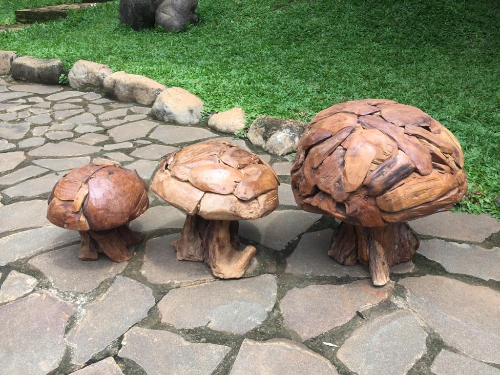 סט פטריות מעץ